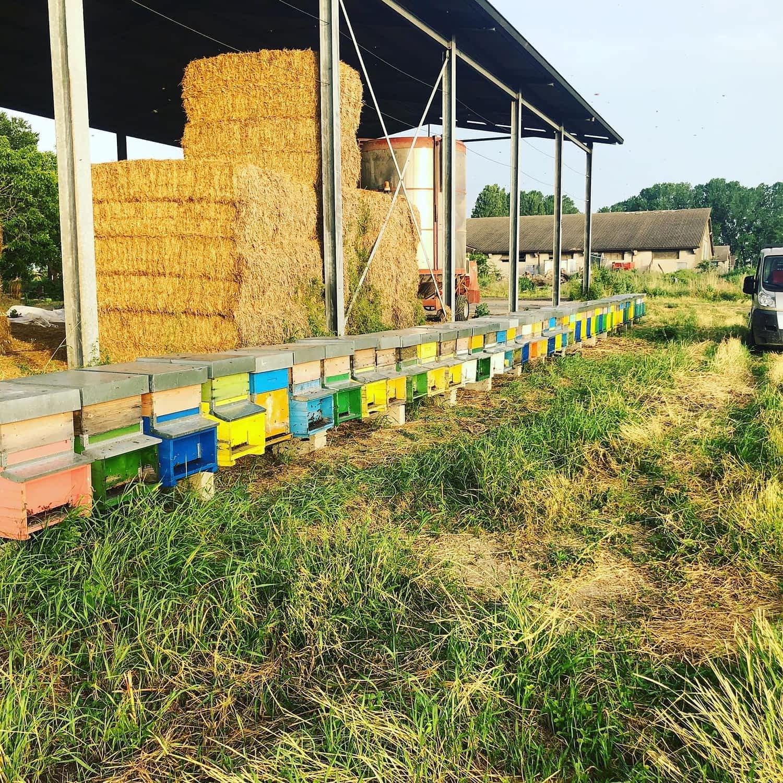 le arnie di apicoltura burato in campagna