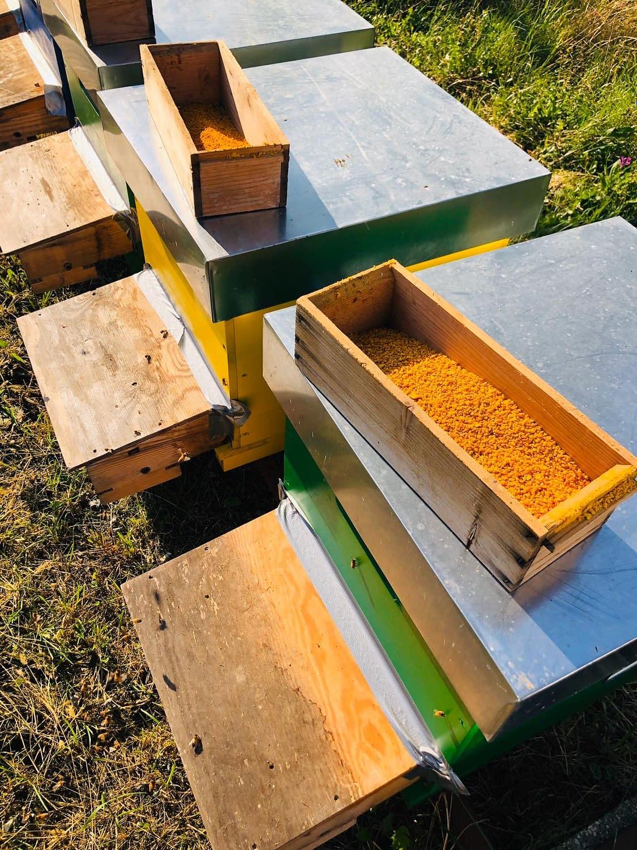 fase di raccolta del polline fresco