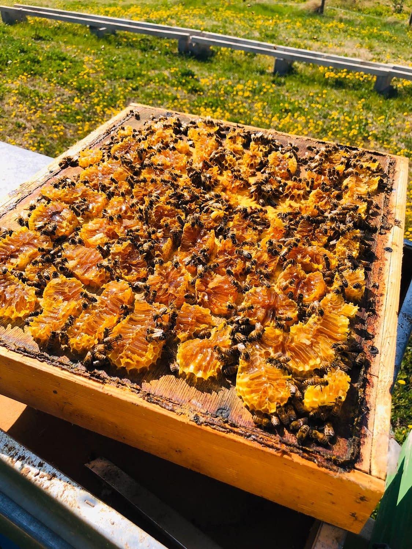 telaio delle api aperto