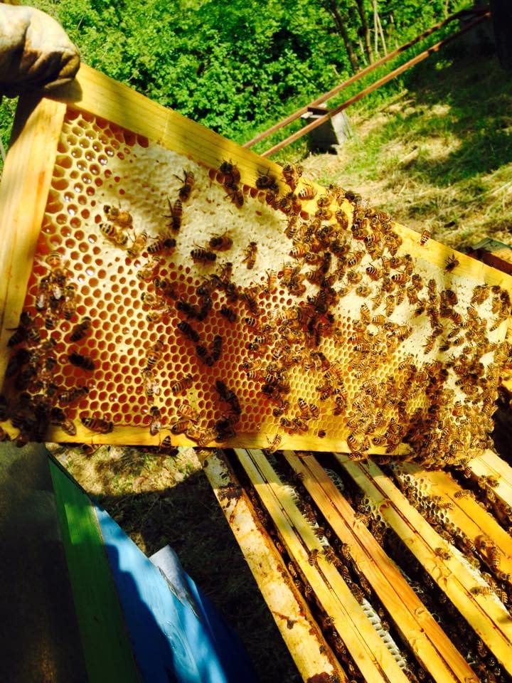 il lavoro delle api diventa miele